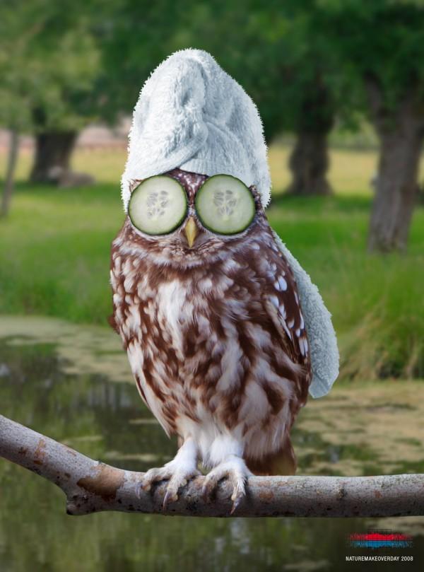 Смешные картинки сова