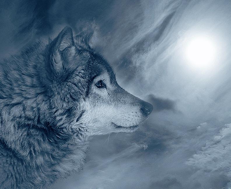 Волк картинка с надписью, днем рождения женя