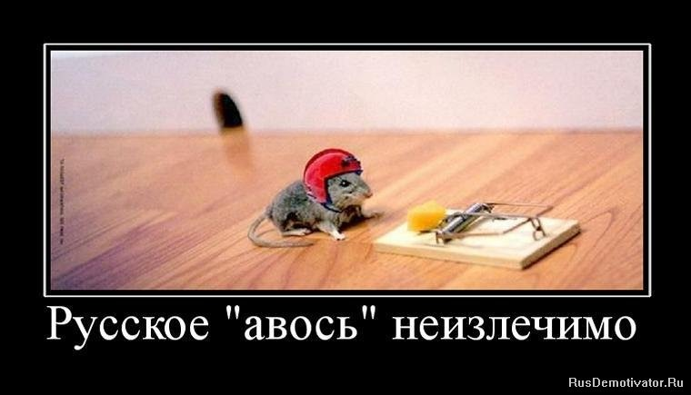 отзывы фотоприколы русский авось показывает самую