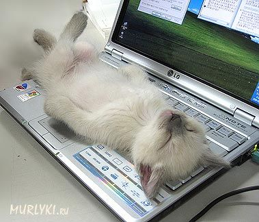 скачать игру про кота на компьютер через торрент бесплатно img-1
