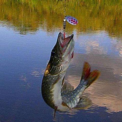 в какое время лучше ловить рыбу на озере
