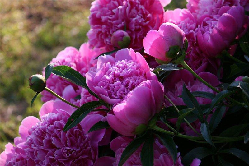 http://www.stihi.ru/pics/2012/06/01/2592.jpg