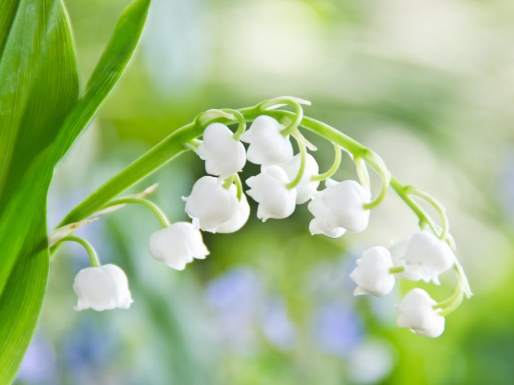 http://www.stihi.ru/pics/2012/06/03/2523.jpg