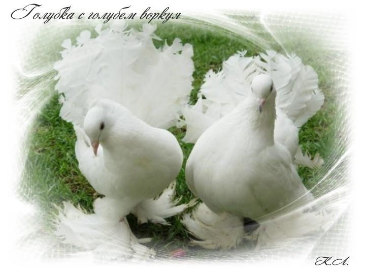 Днем, картинки с голубями и надписями