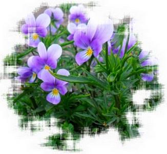 http://www.stihi.ru/pics/2012/06/13/2222.jpg?992