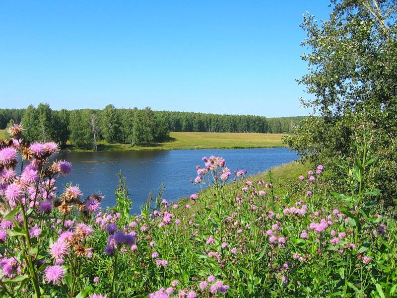 Цветы полевые стихи