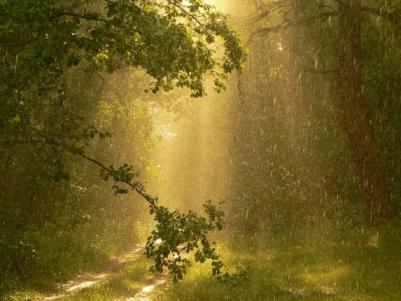 дождик золотой фото