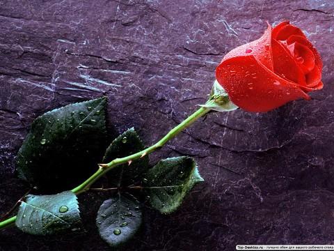 с любовью цветы картинки