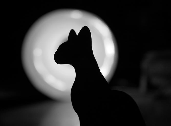 Картинки с черным котом изящные, приятной ночи