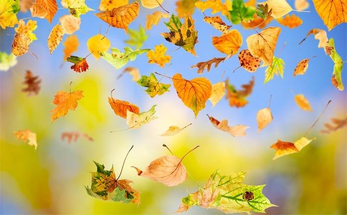 Картинки анимации падают листья