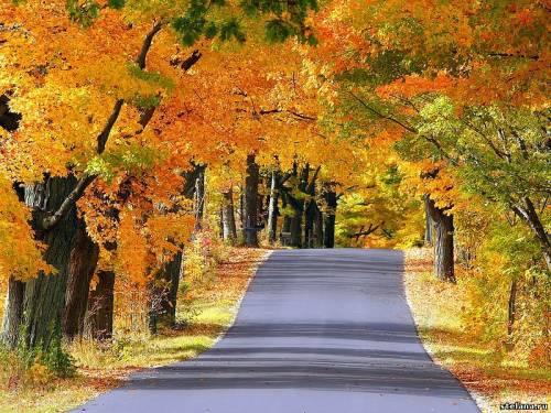 картинки про золотую осень