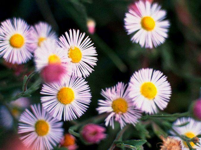 Картинки июльские цветы