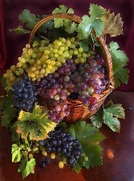 Поздравления с виноградом