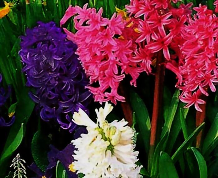 Фото цветов э