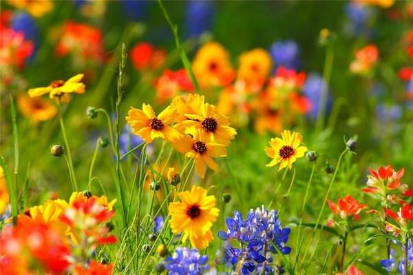 Лето цветы картинка