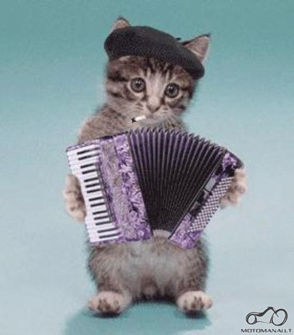 Кот с гармонью