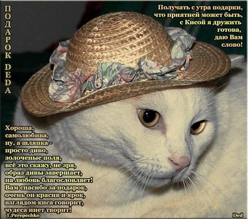 Прикольные стихи к подарку кошка 70