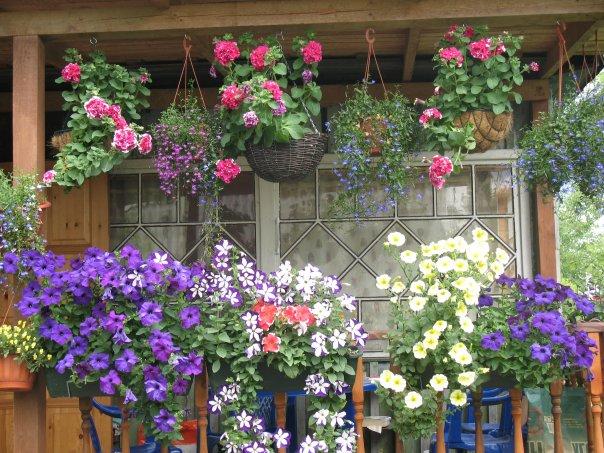 Рассада цветов на улице