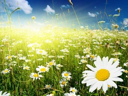 В надежде на лето,лету посвящается !