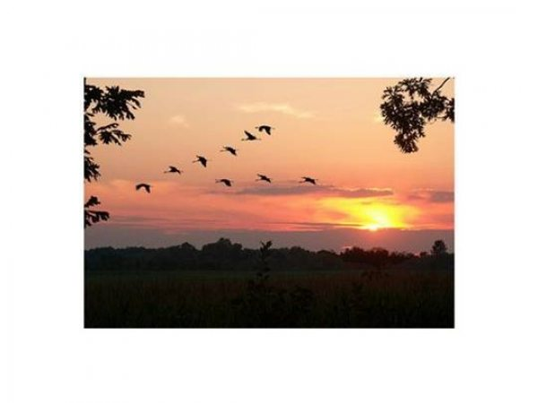24 сентября 2011 в 11:25.  Вдаль стремящийся к югу и к теплым морям.  0. К стае птиц подлетев