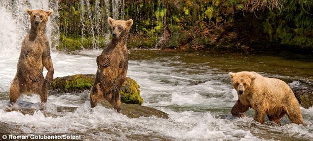 видео приколы на рыбалке с медведем