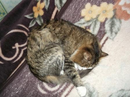 Стих спит кот