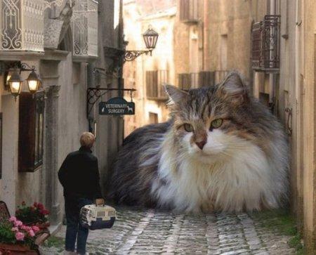 Что где когда ешкин кот