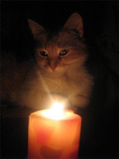 картинки свеча памяти животным что делать
