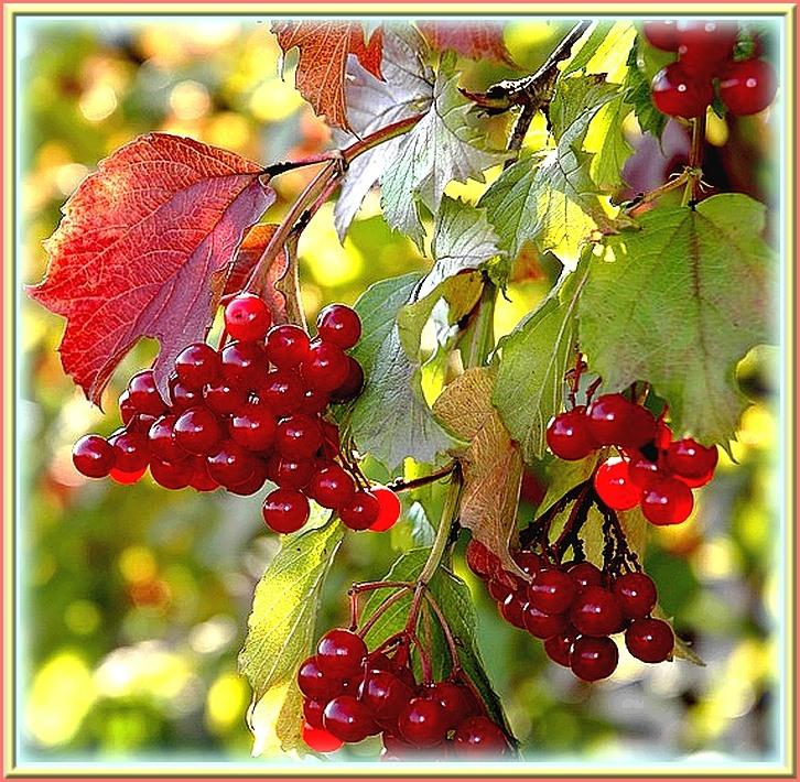 Осенние цветы 17 09 2012год валентина