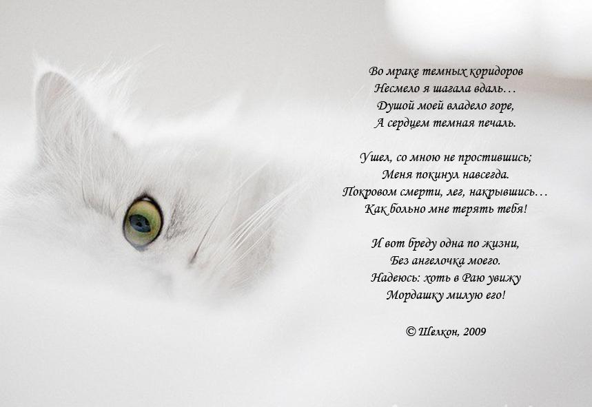 фотографии неожиданно картинки кошки стихами парусам берут руки кисти