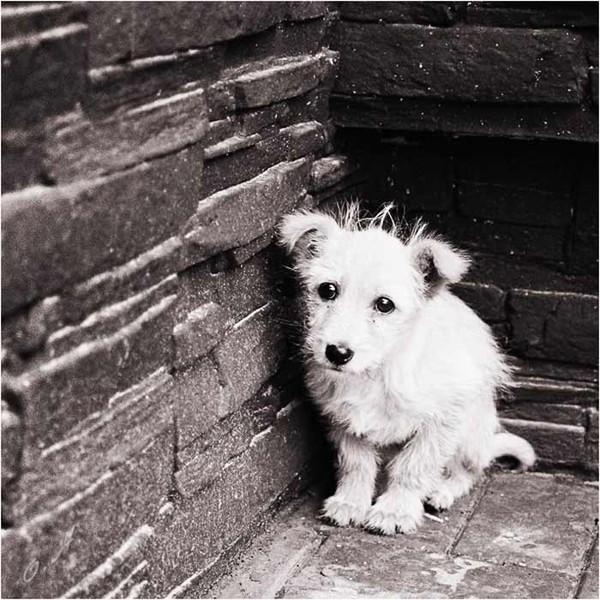 О бездомных собаках стихи