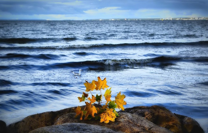 открытки осень и море гарсии
