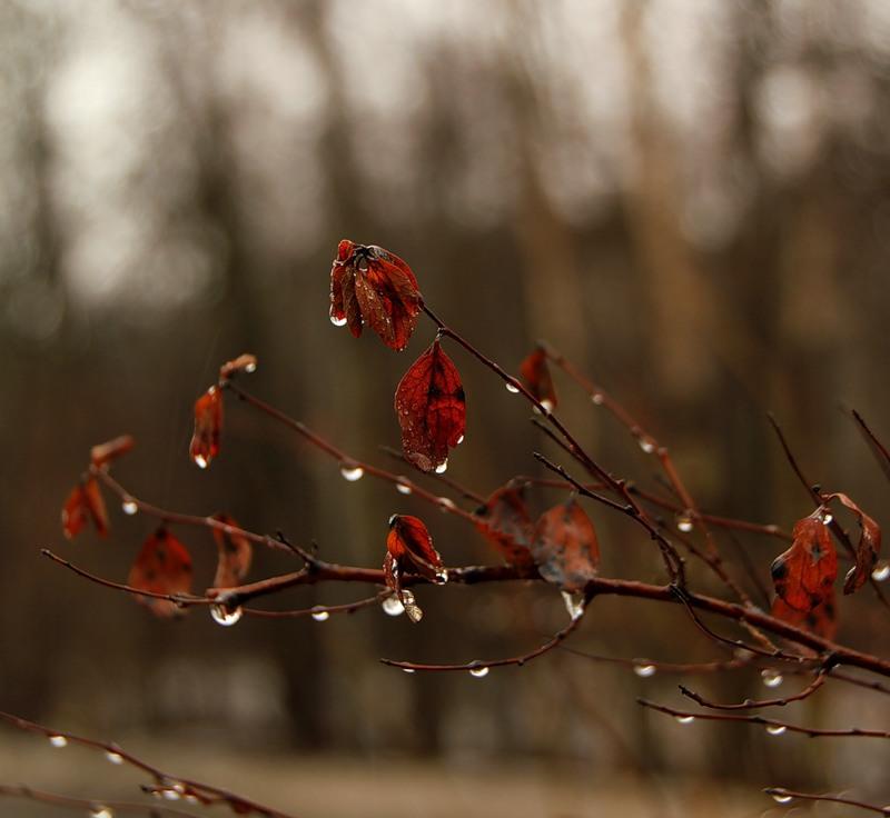 Рисунки осень весна дождливая погода и ветер