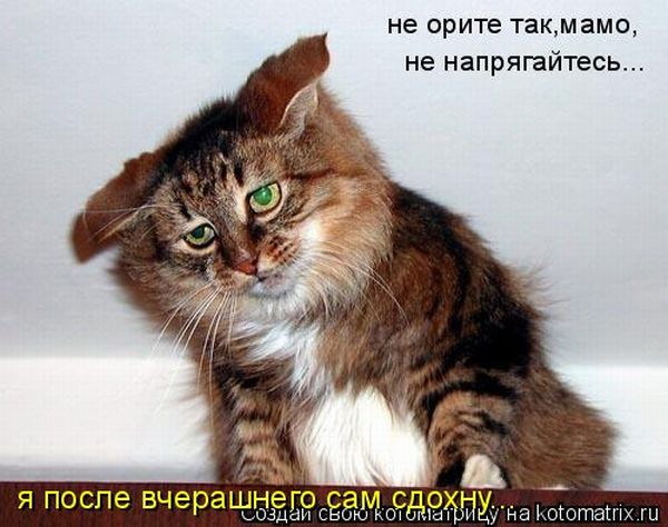 Картинки кот с валерьянкой