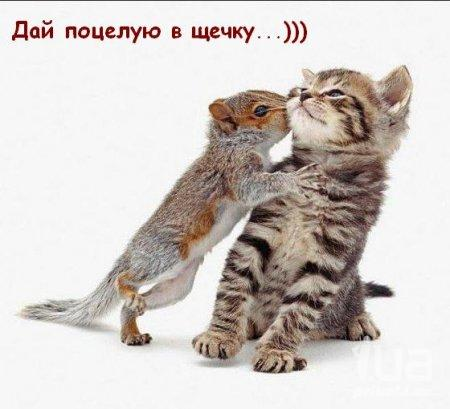 http://stihi.ru/pics/2012/12/02/2741.jpg