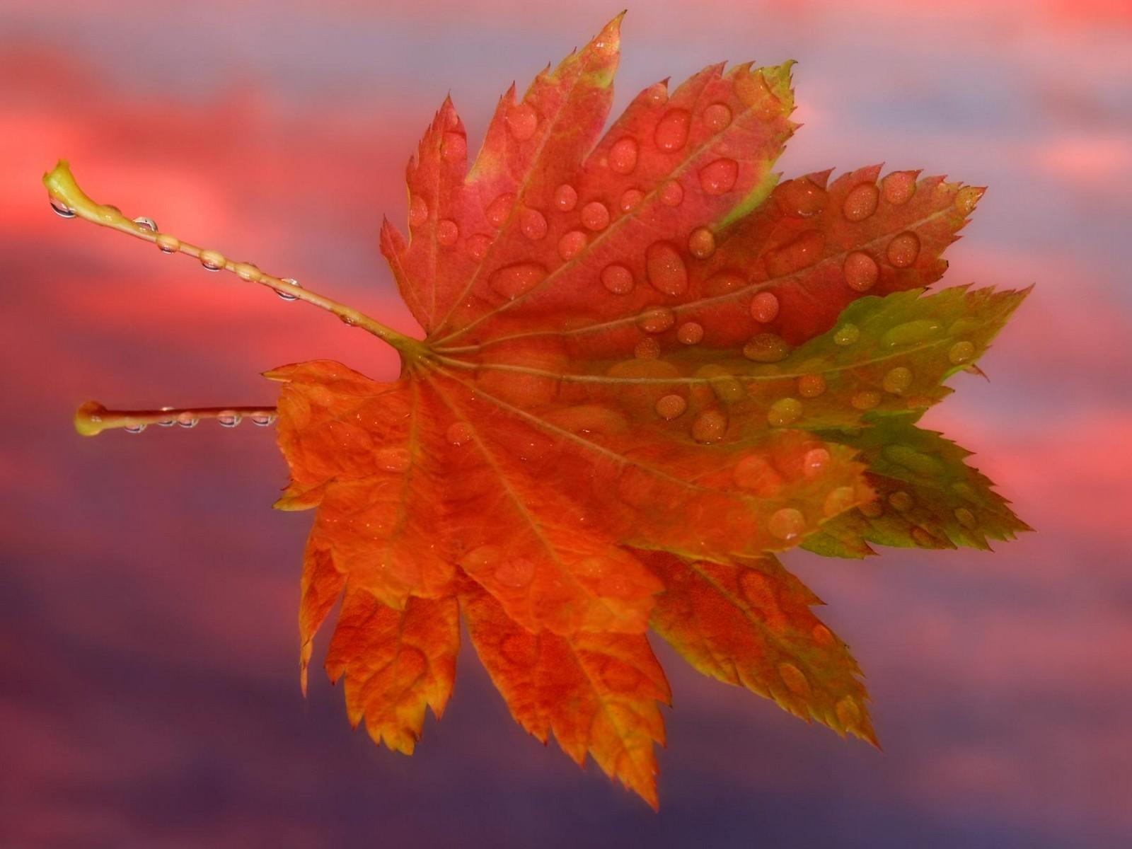 Осенние листья в открытках, смешная картинка