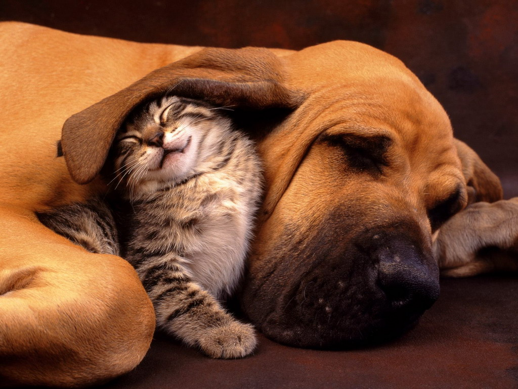 Картинки с кошками собачками