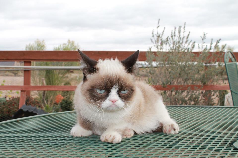 картинки кошка злая