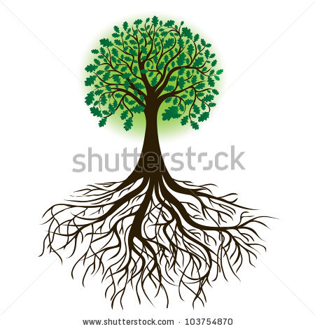 корни дерева картинки