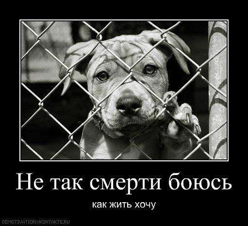 Смерти я не боюсь (Данута Рексць) / Стихи.ру