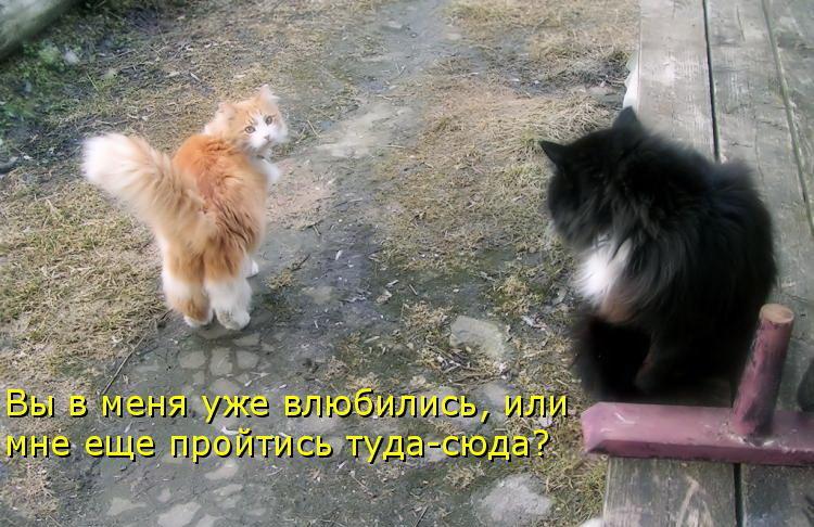 Стихи про любовь кота