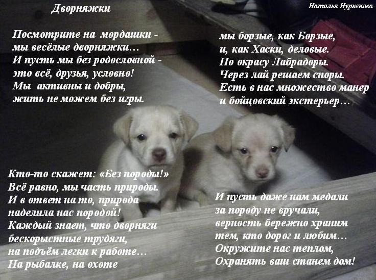 Стих про собаку про дворнягу