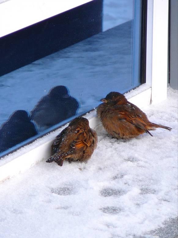 сонник окно стая птиц бились магазинов