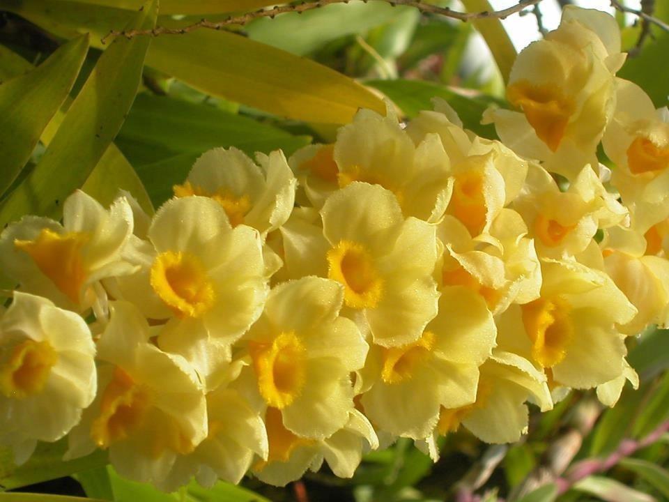 Гугл цветы картинки 3