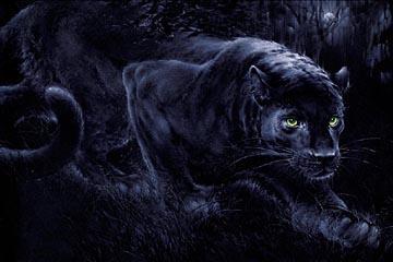 Картинки по запросу стихи черная пантера