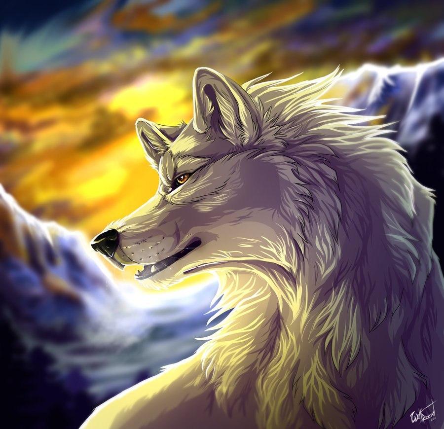 Чёрная фурри волчица 17 фотография