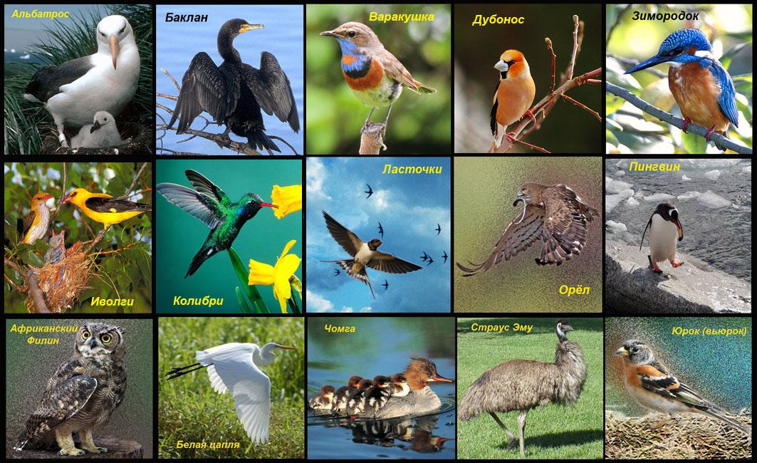 загадка альбатрос