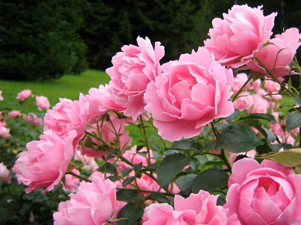 Розовый рассвет на море картины смотреть - 832d1