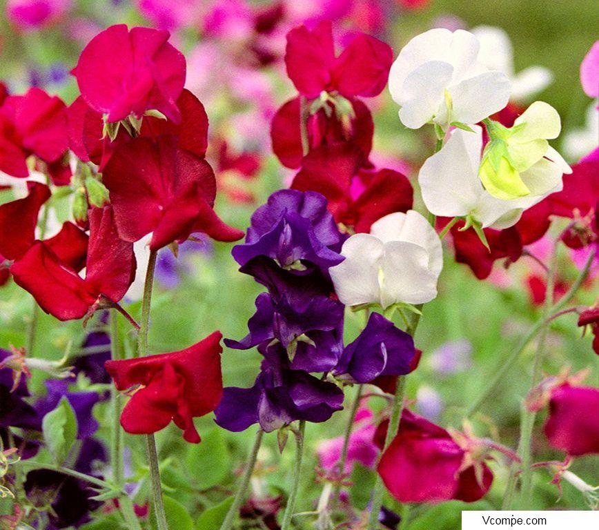Цветы фото и названия можно высадить у