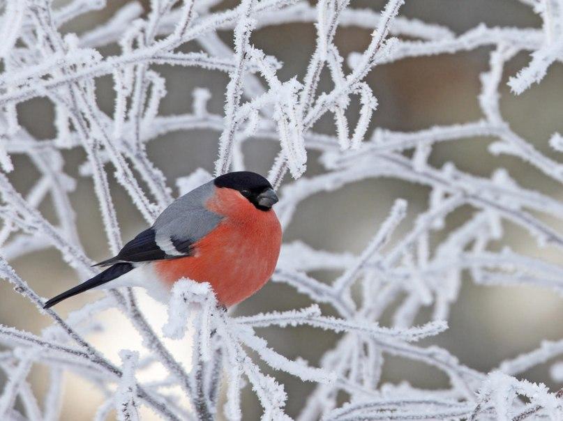 картинки на рабочие стол зима